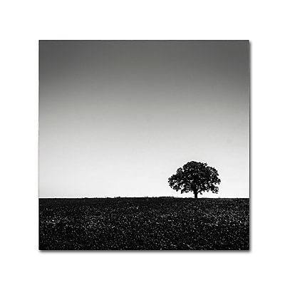 Trademark Fine Art Dave MacVicar 'One Tree Hill' 35 x 35 (ALI0843-C3535GG)
