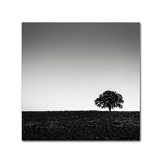 Trademark Fine Art Dave MacVicar 'One Tree Hill'  18 x 18 (ALI0843-C1818GG)