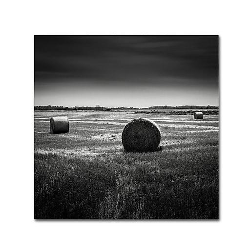 Trademark Fine Art Dave MacVicar 'Rural'  14 x 14 (ALI0848-C1414GG)