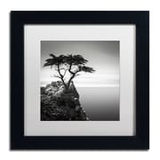 Trademark Fine Art Dave MacVicar 'The Lone Cypress'  11 x 11 (ALI0820-B1111MF)