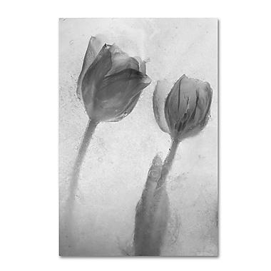 Trademark Fine Art Moises Levy 'Flowers on Ice-1' 12 x 19 (ALI0733-C1219GG)