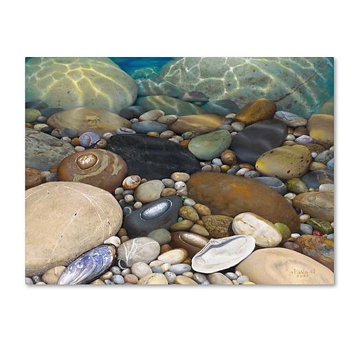 Trademark Fine Art Stephen Stavast 'Shoreline Treasures'  18 x 24 (ALI0746-C1824GG)
