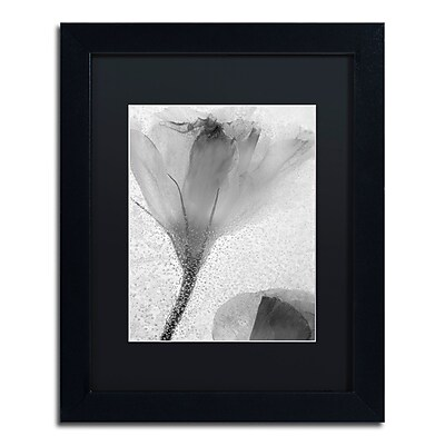Trademark Fine Art Moises Levy 'Flowers on Ice-13' 11 x 14 (886511729285)