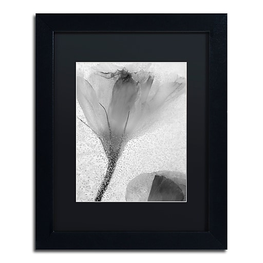 Trademark Fine Art Moises Levy 'Flowers on Ice-13'  11 x 14 (886511729285)