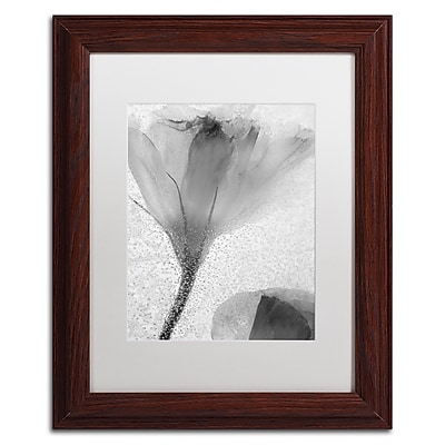 Trademark Fine Art Moises Levy 'Flowers on Ice-13' 11 x 14 (ALI0734-W1114MF)