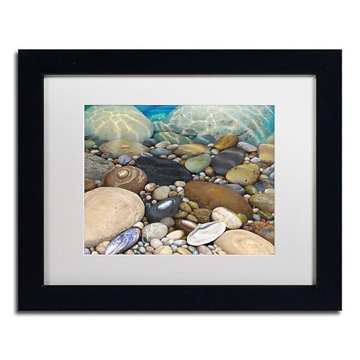 Trademark Fine Art Stephen Stavast 'Shoreline Treasures'  11 x 14 (ALI0746-B1114MF)