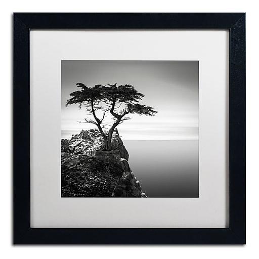 Trademark Fine Art Dave MacVicar 'The Lone Cypress'  16 x 16 (ALI0820-B1616MF)