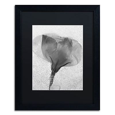 Trademark Fine Art Moises Levy 'Flowers on Ice BW-2' 16 x 20 (886511729063)