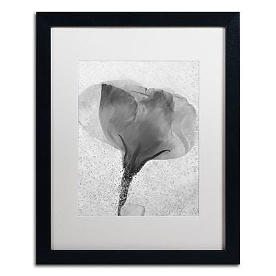 Trademark Fine Art Moises Levy 'Flowers on Ice BW-2' 16 x 20 (ALI0732-B1620MF)
