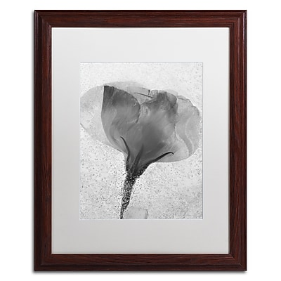 Trademark Fine Art Moises Levy 'Flowers on Ice BW-2' 16 x 20 (ALI0732-W1620MF)