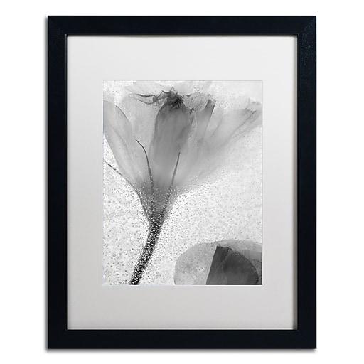 Trademark Fine Art Moises Levy 'Flowers on Ice-13'  16 x 20 (ALI0734-B1620MF)