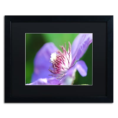 Trademark Fine Art Monica Mize 'Clarity' 16 x 20 (MF136-B1620BMF)