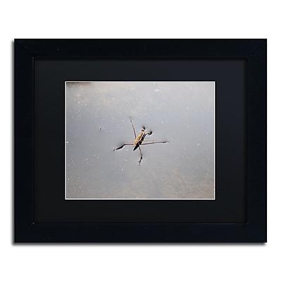 Trademark Fine Art Monica Mize 'Glide' 11 x 14 (MF146-B1114BMF)