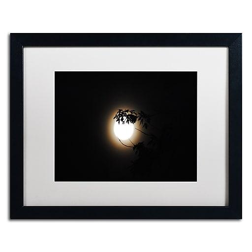 Trademark Fine Art Monica Mize 'Howl'  16 x 20 (MF150-B1620MF)