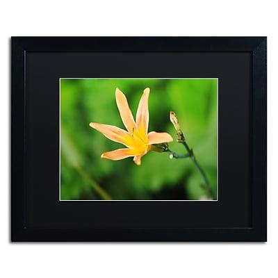 Trademark Fine Art Monica Mize 'Sweet Spice' 16 x 20 (MF170-B1620BMF)