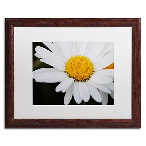 Trademark Fine Art Monica Mize 'Sweet Splendor'  16 x 20 (MF171-W1620MF)