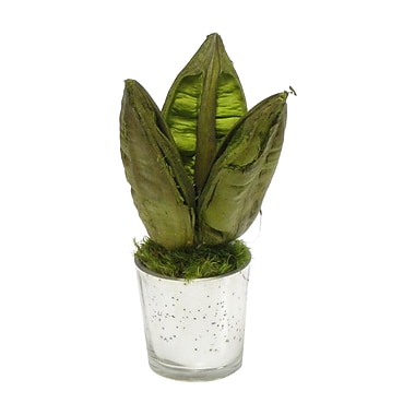 Bougainvillea Sora Pod Basil Plant in Mercury Glass Votive