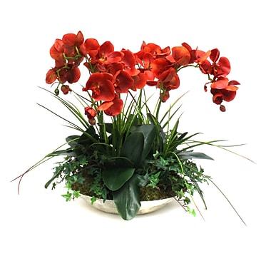 Dalmarko Designs Orchids in Decorative Bowl