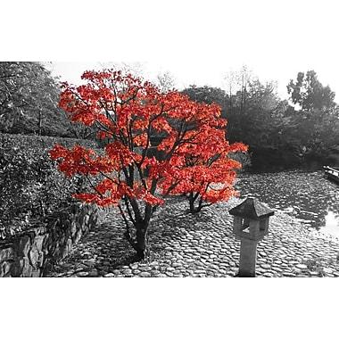 PrestigeArtStudios Autumn's Maple Photographic Print