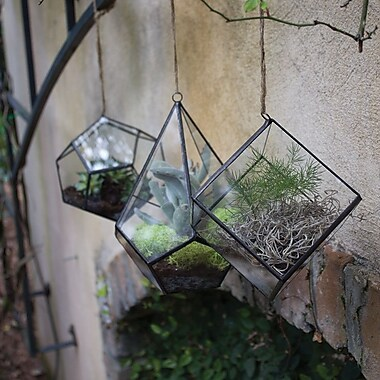 Syndicate Sales Glass Terrarium
