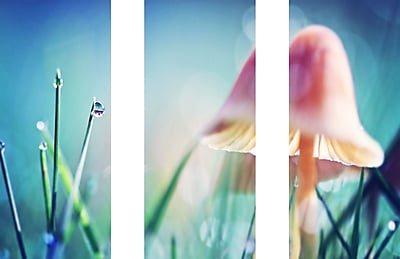 Marmont HIll 'Morning Light Mushroom Triptych' Painting Print on Wrapped Canvas; 40'' H x 60'' W
