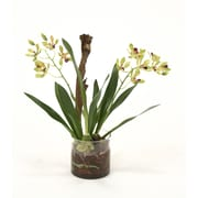 Distinctive Designs Waterlook Vanda Orchid w/ Plant in Cylinder Vase