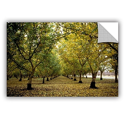ArtWall ArtApeelz Fall Orchard by Kathy Yates Photographic Print; 12'' H x 18'' W x 0.1'' D