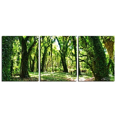 Ready2hangart 'Mystic Forest' by Chris Doherty 3 Piece Photographic Print on Wrapped Canvas Set