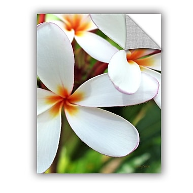 ArtWall ArtApeelz White Plumeria by Kathy Yates Photographic Print; 36'' H x 48'' W x 0.1'' D