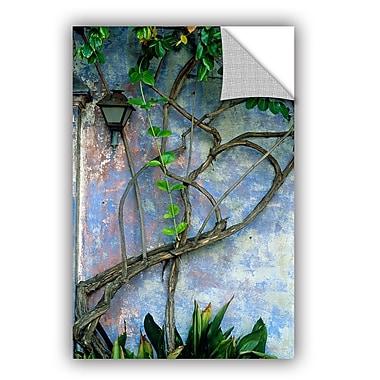 ArtWall ArtApeelz Vine And Wall by Kathy Yates Photographic Print; 12'' H x 18'' W x 0.1'' D