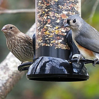 Droll Yankees Clever Clean 2 Port Sunflower Tube Bird Feeder