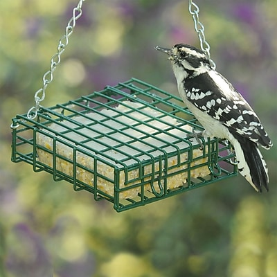 Droll Yankees Suet Bird Feeder (WYF078277868961) photo