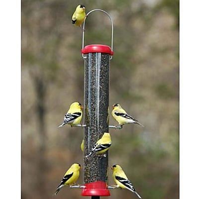 Droll Yankees Bird Lovers 4 Port Nyjer/Thistle Feeder; Red (WYF078277868970) photo