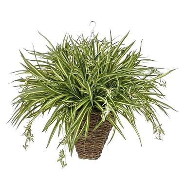 House of Silk Flowers Artificial Spider Hanging Plant in Square Basket
