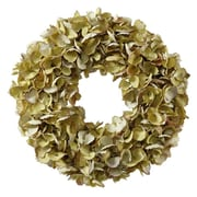 Jane Seymour Botanicals Wreath Dried Hydrangea; Green / Purple