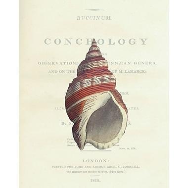 Portfolio Canvas Conchology Buccinum by Porter Design Graphic Art on Wrapped Canvas