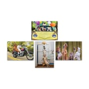 "Portal Fun Animal Photography Cards, Birthday, 5"" x 7"", 4/Pack"