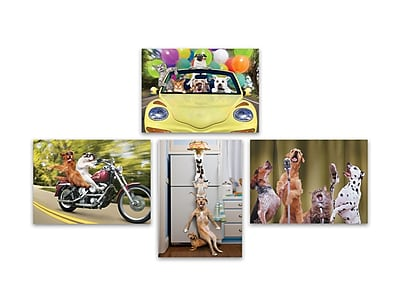 Portal Fun Animal Photography Cards, Birthday, 5