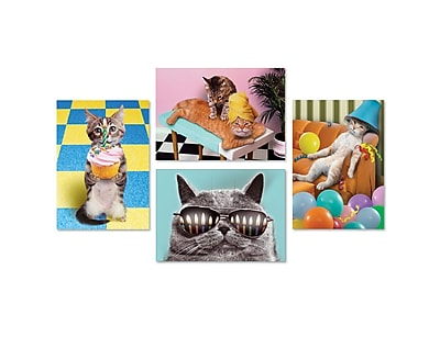 Portal Fun Cat Photography Cards, Birthday, 5