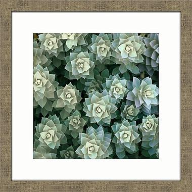 Melissa Van Hise Desert Bloom II Framed Photographic Print