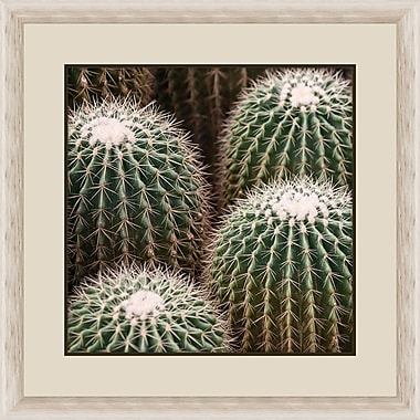 Melissa Van Hise Cactus Bloom II Framed Photographic Print