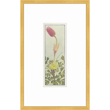 Melissa Van Hise Alpine Flora I Framed Graphic Art