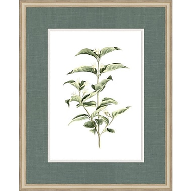Melissa Van Hise Botanical Simplicity III by Choate Design Framed Graphic Art