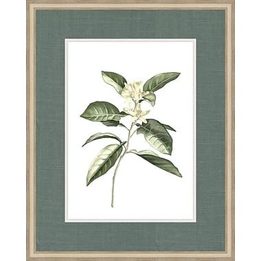 Melissa Van Hise Botanical Simplicity V by Choate Design Framed Graphic Art
