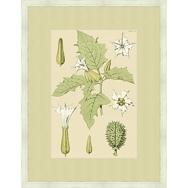 Melissa Van Hise Botany Pl. 13 (A) by Choate Design Framed Graphic Art