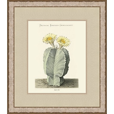 Melissa Van Hise Flowering Cactus Pl. 110 (A) by Choate Design Framed Graphic Art