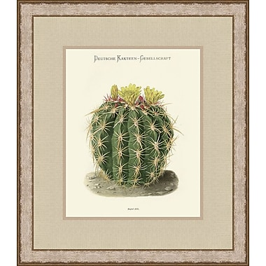 Melissa Van Hise Flowering Cactus Pl. 177 (A) by Choate Design Framed Graphic Art