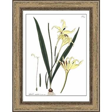 Melissa Van Hise Andrews' Gladiolus by Choate Design Framed Graphic Art