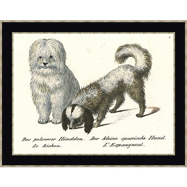 Melissa Van Hise Fancy Dogs III by Choate Design Framed Graphic Art