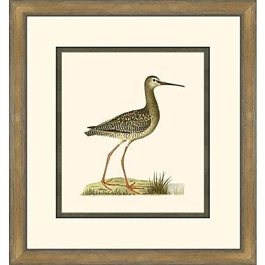 Melissa Van Hise Shore Birds III Framed Graphic Art